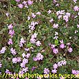 Flowers 28