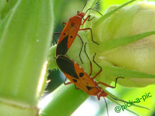 Bug mate