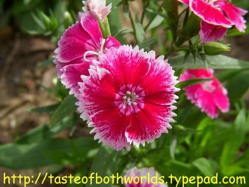 Flowers 36